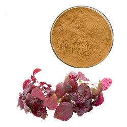 Семена Perilla экстракт листьев 95%/98% Sclareol Sclareolide извлечения