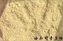 Soluble dans l'huile extrait de romarin (acide Carnosic 10%-70%) (CAP60)