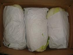 La nouvelle récolte chou frais pour l'exportation (1,5 kg)