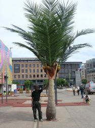 Artificial árbol de palma de coco al aire libre grandes Palmeras en interiores