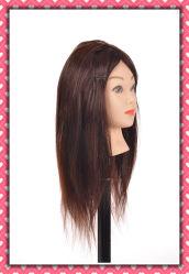 El cabello humano 100% de la cabeza de la lección 16 pulgadas para la formación de la escuela de belleza