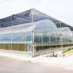 屋外Shengqiangはテントの側面の昆虫のネットとのプラスチック温室の庭Agricultura Medidorを育てる
