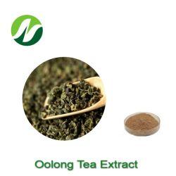 China ISO Alta calidad de los valores de fábrica: 1~20 4: 1 Camellia Sinensis extracto de té Oolong