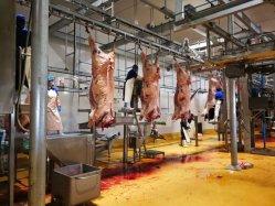 Alta qualità 380V/220V su misura applicazione bovini / bovini / macello di mucca attrezzature per la macellazione