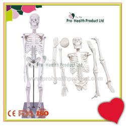 Манекен медицинских учебных пособий 45см Mini человеческого скелета модели