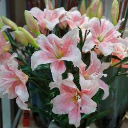 La decoración de flores de plástico de Tiger Lily flor artificial
