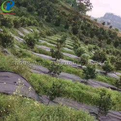 Plástico cor preta e verde a cobertura de solo os tapetes de tecido de controle de plantas daninhas Mulch Mat