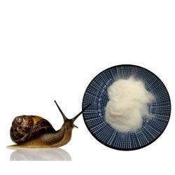 Escargot Slime extract /blanchissant de collagène Cream/ mucine