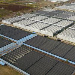소형 높은 지붕 유리는 토마토 증가를 위한 온실을 덮었다