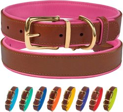 Collar de perro de cuero duradero fuerte con acolchado de suave