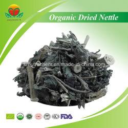 Ortie séchées organiques de haute qualité