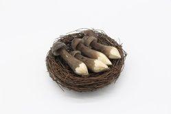 Vegetais orgânicos / conservas de cogumelos