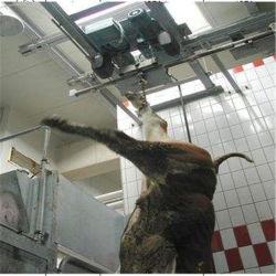 Abattage de bovins/équipement/de l'abattage de la machine en abattoir