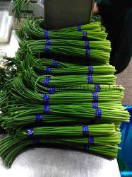 Het Chinese Verse Knoflook van uitstekende kwaliteit ontspruit het Knoflook van Spruiten