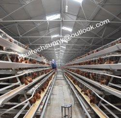 Compartimento de aves galvanizado gaiola de galinha dos ovos de Equipamentos Agrícolas