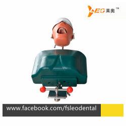 歯科シミューレータ訓練のための歯科幻影のヘッド型