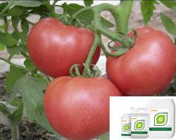 유기농 칼슘 마그네슘 2차 및 미세영양소 비료