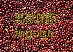 La exportación de alimentos de cosecha nueva buena Qiality Alta de frijol rojo
