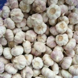 새로운 추수 신선한 순수한 백색 마늘