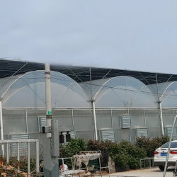 El crecimiento de plantas de flores de Cine de la casa verde