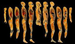 Conjunto de cortes de todo el cuerpo