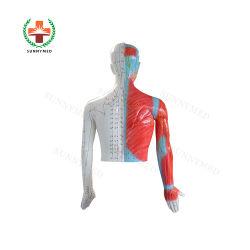 SY-N022 TCM 医療指導装置人体刺鍼術モデル