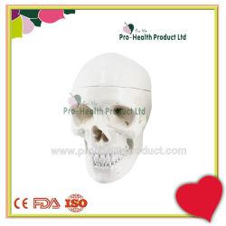 실물 크기 PVC 해부학 백색 두개골 3D 모형