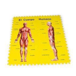 Cérebro de brinquedos a imitar os homens de espuma de design novo corpo cabrito de papelão Puzzle tapete EVA com impressos