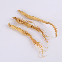 Polvo de raíz Gingseng saponina Extracto de Ginseng Panax Ginseng Extracto de raíz