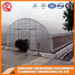 Landbouw/Commercieel Single-Span/Multi-Span Plastic Film Greenhouse Hydroponics Grow System for Tomato/sla/Cucumber/Flowers/Fruits