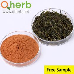 Los aditivos alimentarios la catequina EGCG los polifenoles del té el 98% de extracto de té verde muestra gratuita