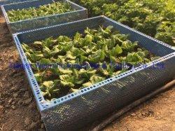 De gemakkelijke Vierkante Voet Gardern/die DIY van de Installatie Vierkant planten