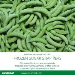 Muito boa qualidade,IQF Frescas Congeladas As ervilhas sugar snap, IQF Feijão doces,Nova cultura,Melhores Preços,IQF sugar snap Ervilhas congeladas as ervilhas sugar snap,ISO/HACCP/BRC/Kosher/Halal