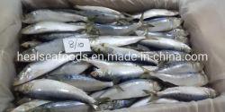 Bevroren Sardine Oman Sardine