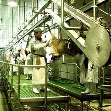 Halal Schaf-Schlachtlinie mit Metzger-Ziege-Schlachthof-Maschinerie