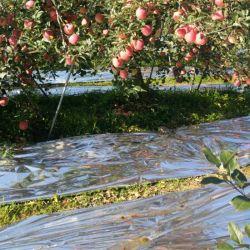 Aspirateur de feuilles en PET métallisé BOPP Film Film de l'agriculture pour le jardin