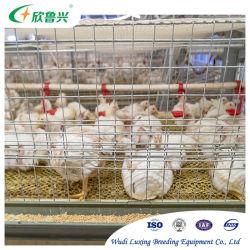 Las Aves de Corral de Pollos de la capa de batería automática de la jaula de pollo para la cría de aves