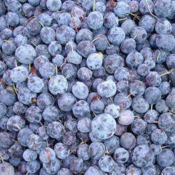 Qualidade de frutos de Geléia de mirtilo congelados