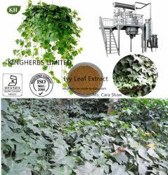 IVY экстракт листьев, Hederacoside Hederacosides 30% с 10% в HPLC