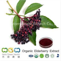 Polvere organica standardizzata estratto naturale della bacca di sambuco nera della pianta (Sambucus) per l'erba antiinfluenzale del virus di erbe