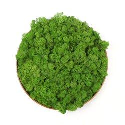 Малые MOQ стене висел корпусной Зеленый мох для монтажа на стену оформление