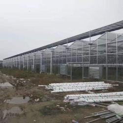 Стекло Multi-Span заводская цена сельскохозяйственных выбросов парниковых газов для продажи