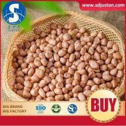 2020 Getreide geblichene Erdnuss-Kern-weiße Haut-Erdnuss-Kerne Franc O M China