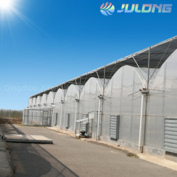 Multi-Span Po/película PE invernadero con sistema de cultivo hidropónico de tomate