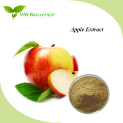 SGS ISO Certified Phlorizin Extracto de polvo/Apple