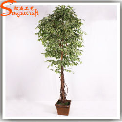 Cina fornitore artificiale Live Ficus Bonsai albero