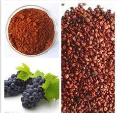 Corteza de pino de alta calidad extracto vegetal/OPC/100% de extracto de semilla de uva