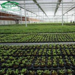 Venlo Tomatewachsendes verwendetes Glashandelsgewächshaus für Bauernhofhaus