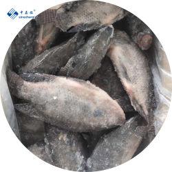 La Chine gelé nettoyé vidé le tilapia à l'échelle de la fabrication niloticus Poisson congelé de fruits de mer Le tilapia noir