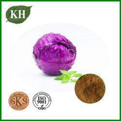 Extracto de colinabo/Morado Kale/extracto en polvo Extracto de Lombarda